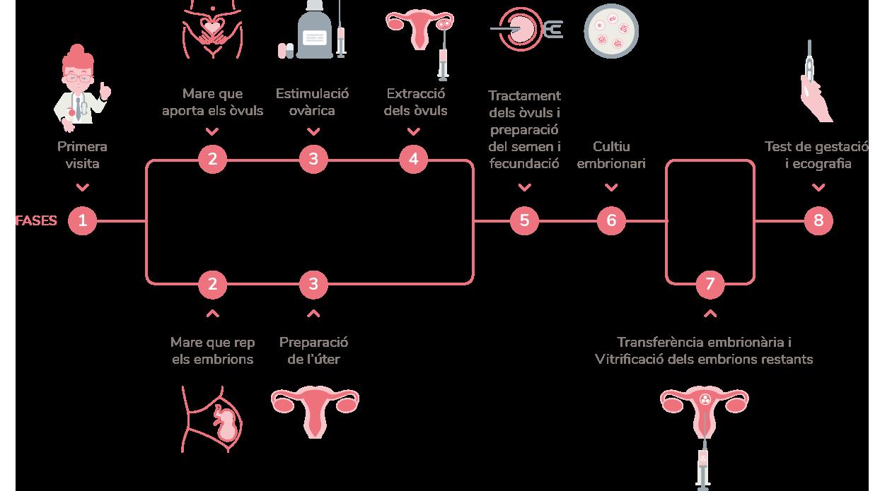 Mètode Ropa, procès que és realitza a embriogyn.