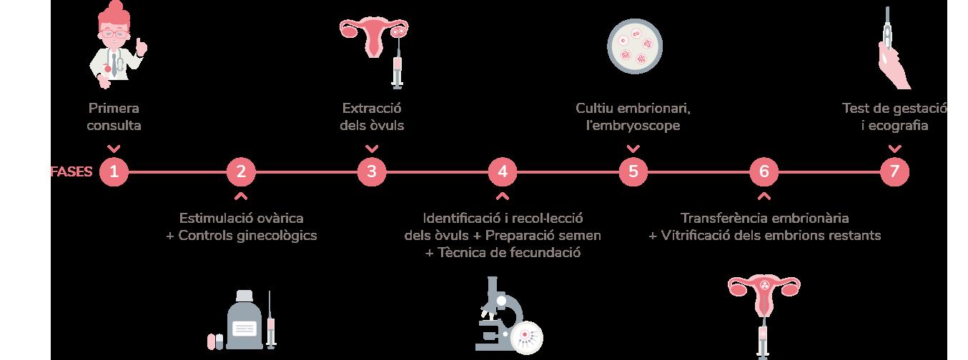 Fecundacio In vitro, Embriogyn, Tractaments fertilitat