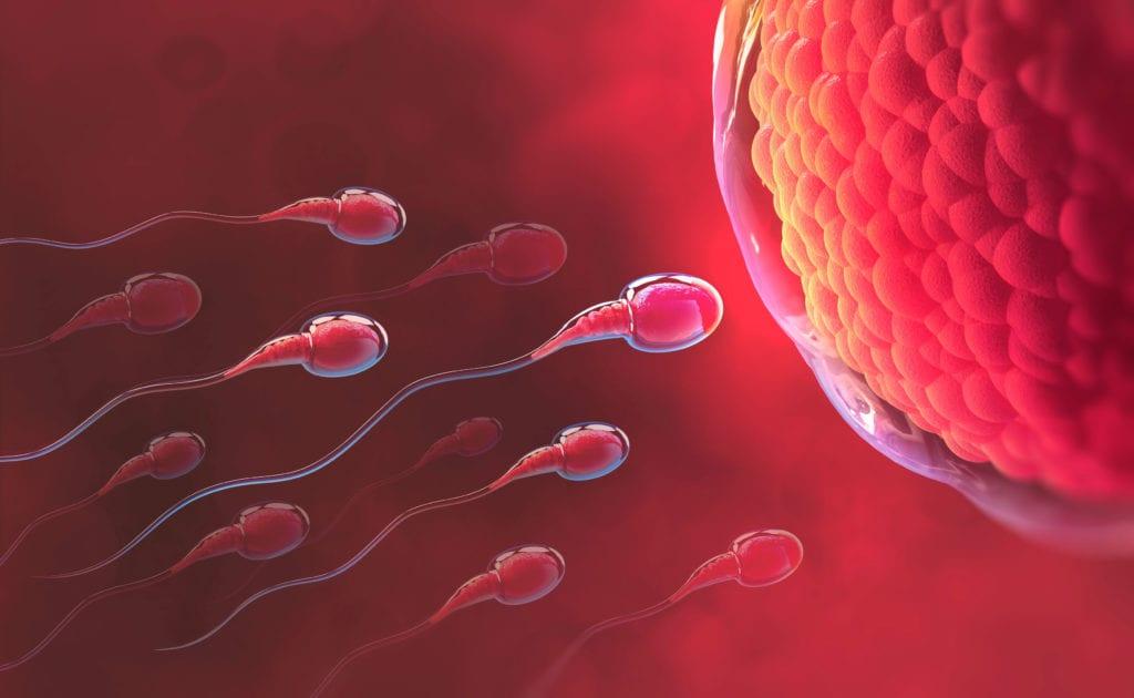 MACS i FERTILE Tècniques de selecció espermatozoides