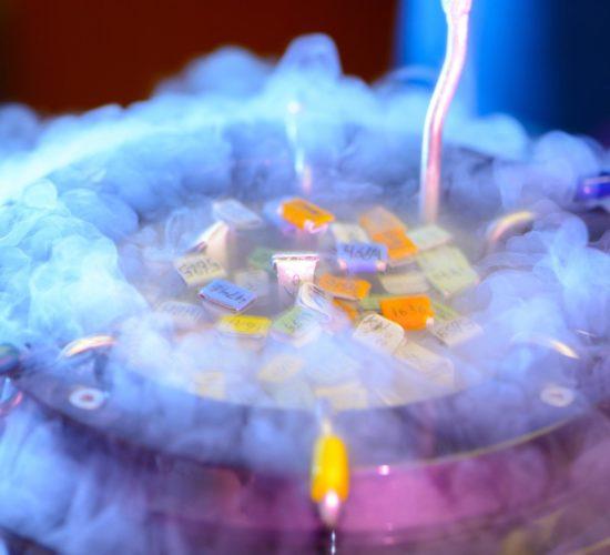 congelacion_embrionaria2